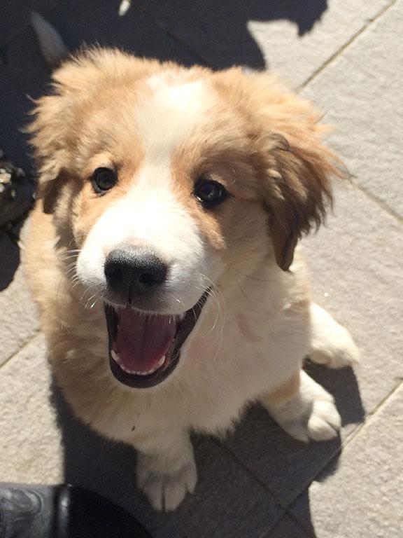 Unser Hund Nelly